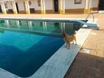 Joao's pool